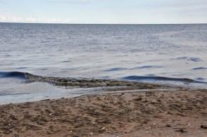 Pozostały tylko fale prostopadłe do brzegu :).