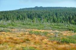 Są to podmokłe łąki u stóp Jizery. Tu przy okazji widać obie szczytowe skały.