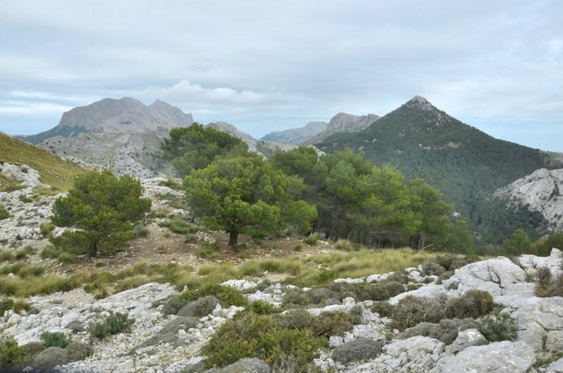 Puig Major, masyw Puig de Massanella i trójkątny Puig de l'Ofre.