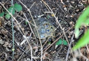 Żeby nie było: faktycznie w Bułgarii żółwie spacerują samopas :)