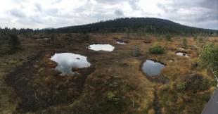 To dalej, kolejny ścisły, torfowy rezerwat Na Čihadle.