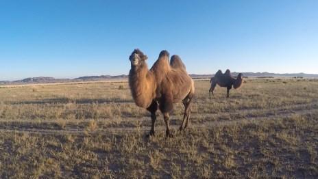 Kazachstan – stepy, pustkowia i ogrom wszystkiego