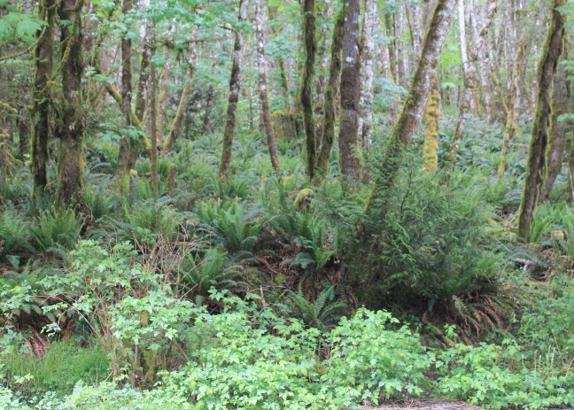 East Sooke Regional Park, Rain Forest