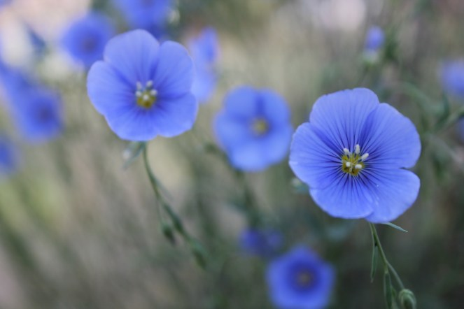 West Kelowna, flowers