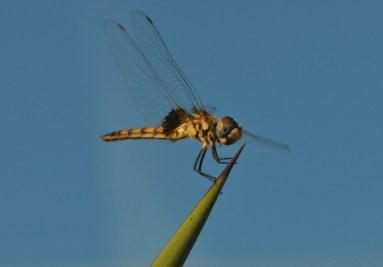 Goodbye dragonfly... So long summertime.
