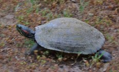 My how time flies on the back of a turtle.