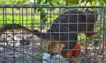 Squirrel and Tomato (6) (1280x767)
