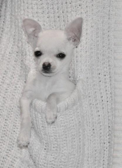 It's juxta puppie