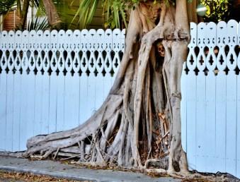 SKELETON IN TREE (1024x781)