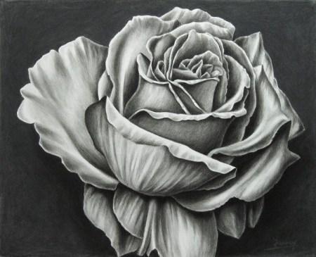 Rose Kohlezeichnung, Kunst, Malerei Gemälde Painting