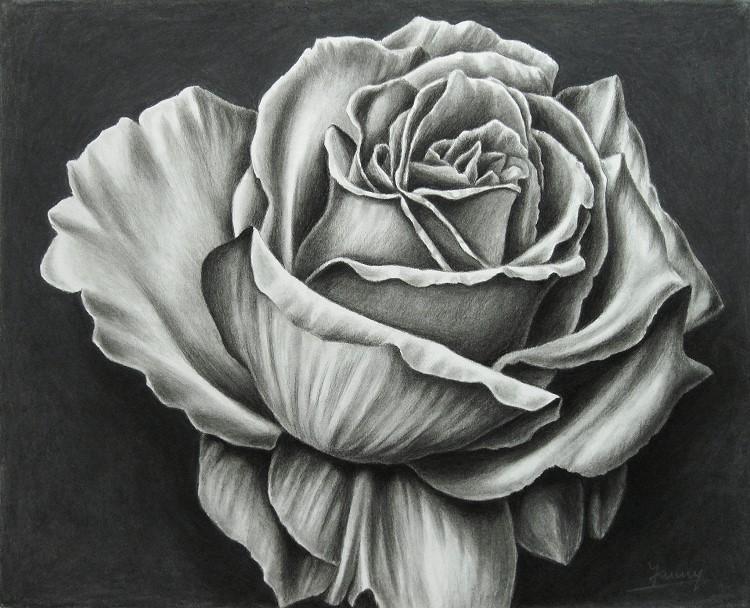 Rose Kohlezeichnung