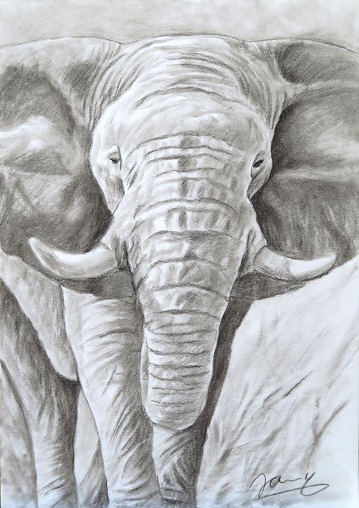 Elefant Kohlezeichnung Kunst Malerei