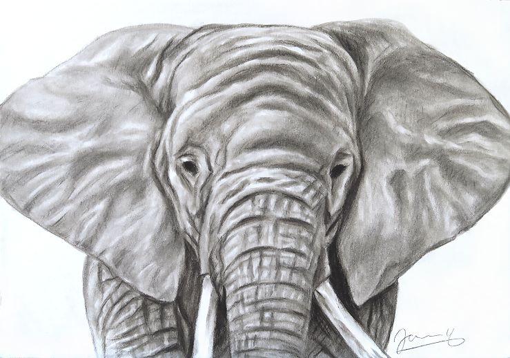 Elefant Baby Kohlezeichnung Kunst Malerei Zeichnung