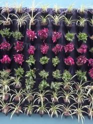 Mexico city plants