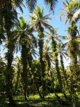 zapatillas islands palm trees