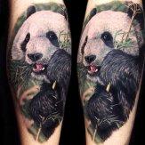 Corey Oda Tattoo Panda