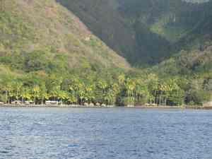Palmenstrand St. Lucia