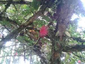 Blueten an Baum