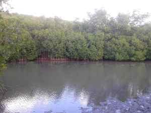 Mangrovensuempfe