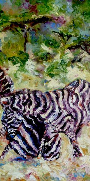 Zebra Scuffle