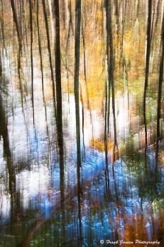 Arboreal Abstract