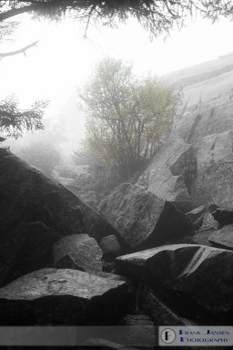 Foggy View up Monadnock