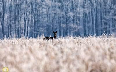 Ree, Landgoed Ennemaborgh, winterlandschap, winter