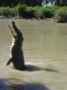 krokodil-kakadu