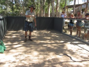 gevaarlijke-dieren-australie