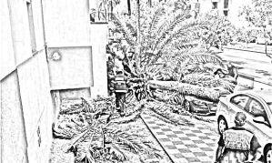 Caída de palmera en Los Barrios
