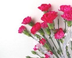 母の日 花言葉 鉢植え 花束
