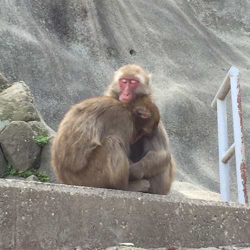 This is the review!  Children were really excited to see monkeys at Mt. takasaki  in Beppu-city, Oita prefecture.