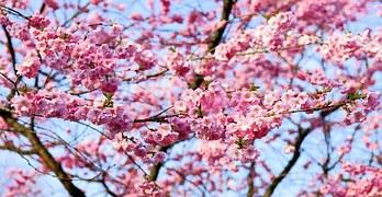Japanese amazing April.