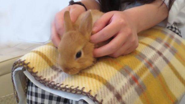 ms.Bunny②