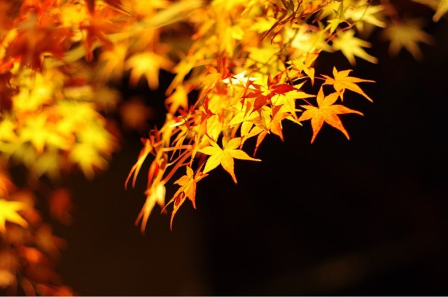 A secret spot with an amazing view of autumn leaves in Kyoto: Shouji Temple (勝持寺)!