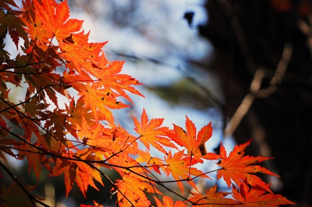 Nasu(那須)― One of the most beautiful spots for leaf peeping in Kanto area!