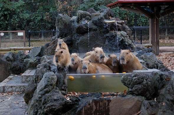 埼玉こども動物公園