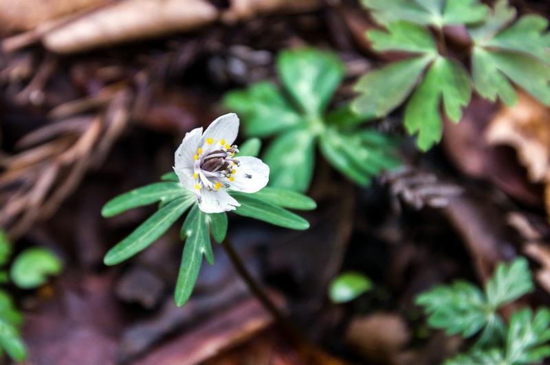 160320霊仙山の花