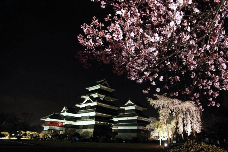 松本城と夜桜