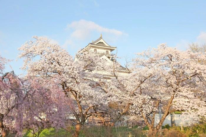 山形県上山市 羽州の名城「上山城」と桜の風景を見に行こう!