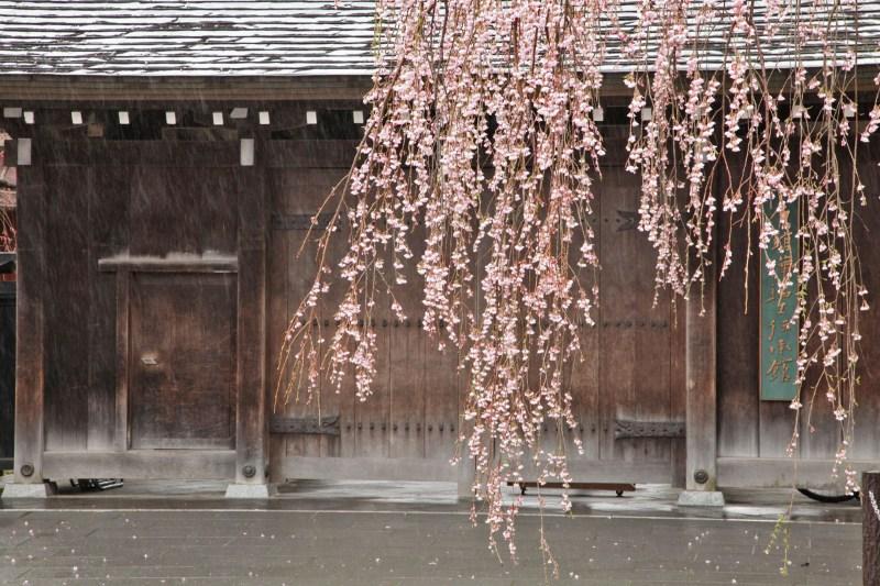 角館のしだれ桜の風景