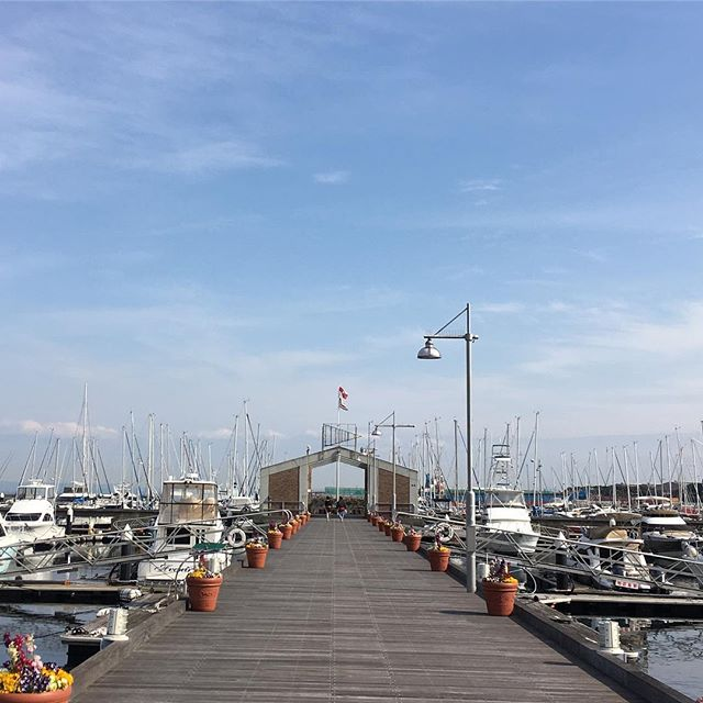 横浜ベイサイドマリーナ Yokohama Bayside Marina #japan #yokohama #yacht #sailing #harbour #sea - from Instagram