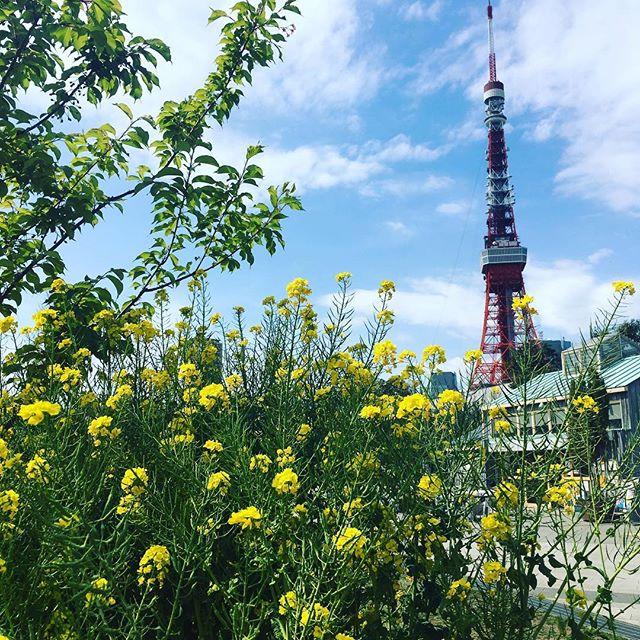 芝公園 Shiba park #japan #tokyo #shibakoen #tokyotower #nanohana - from Instagram