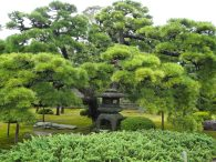 Park v Kyotu.