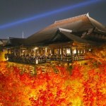 Autumn leaves Light-Up in Kyoto