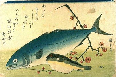 A Shoal of Fishes Fugu Yellowtail