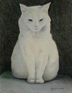 The Meditating Cat
