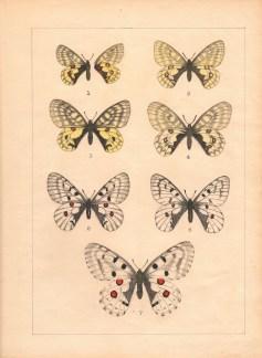 Butterflies-A-1100