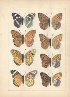 S-Shigematsu-(Butterflies)_1100