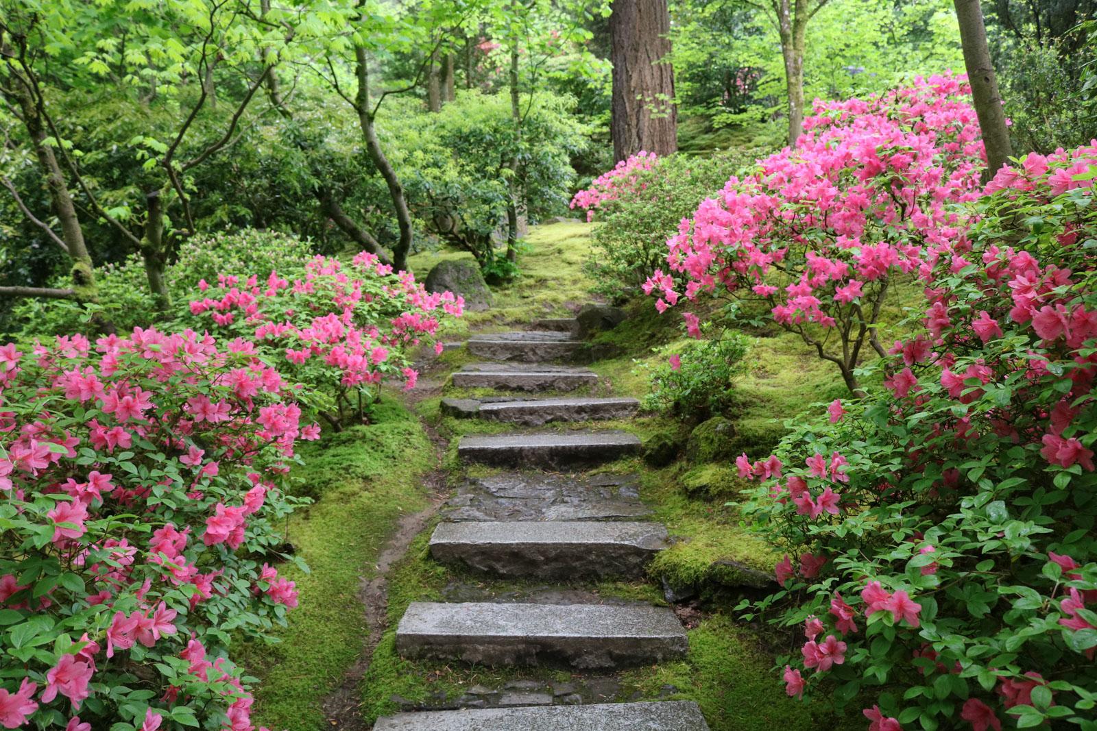 A Walk Through the Natural Garden Portland Japanese Garden